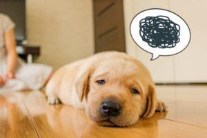 モヤモヤの吹き出しをつけられて、切なそうな目でこちらを見ながら伏せをしている犬